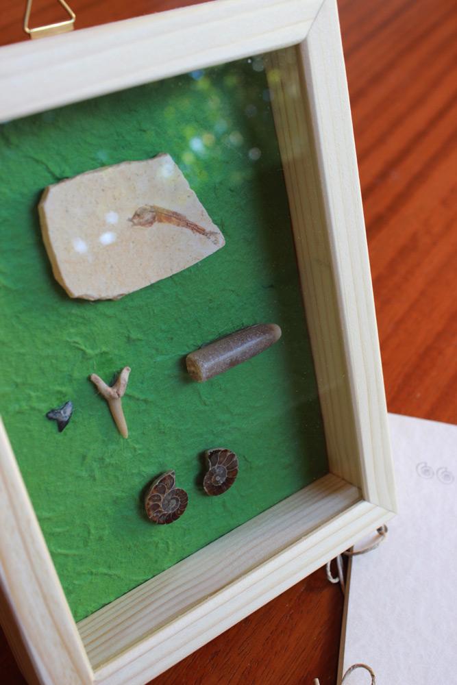 quadretto-fossili